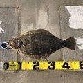 まさぴさんの宮城県でのヒラメの釣果写真