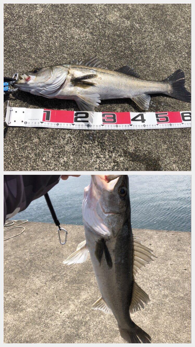 サイトさんの投稿画像,写っている魚はスズキ