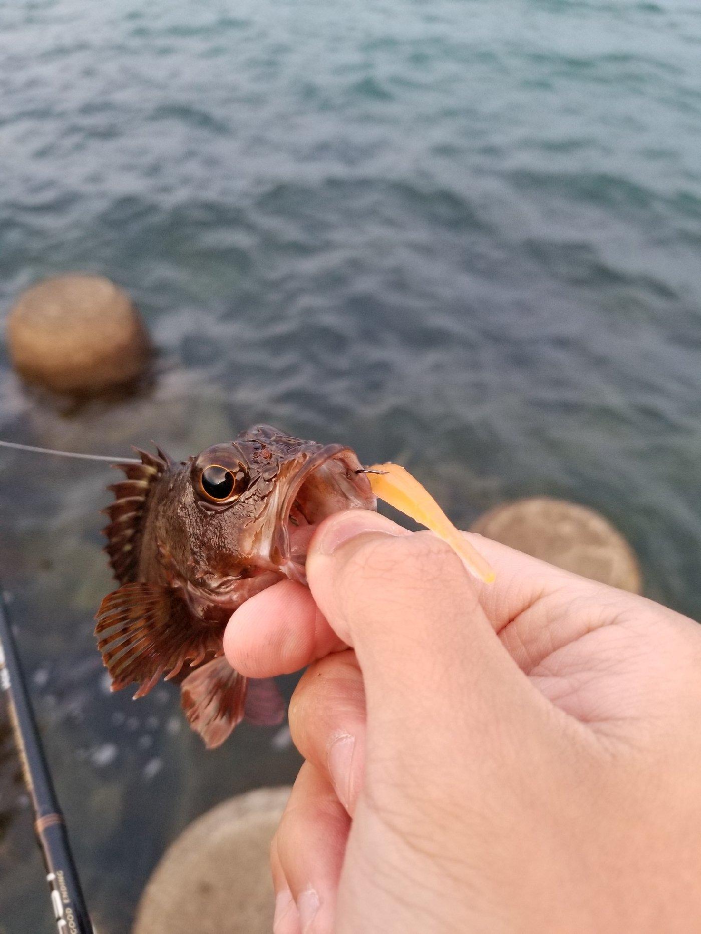 Shunさんの投稿画像,写っている魚は