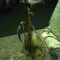 加藤智之さんの静岡県熱海市での釣果写真