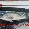 QBさんの滋賀県での釣果写真