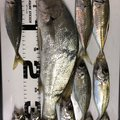 Suguru さんの愛知県名古屋市での釣果写真