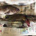 エクイップ2さんの青森県東津軽郡での釣果写真