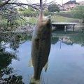hide7さんの福岡県春日市での釣果写真