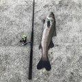 たいよーさんの鹿児島県薩摩川内市での釣果写真
