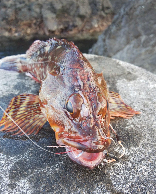 BONさんの投稿画像,写っている魚はカサゴ