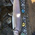 さなぎむしさんの長野県での釣果写真