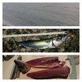 yujiさんの静岡県沼津市でのマサバの釣果写真