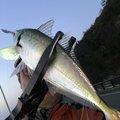 はっしぃさんの新潟県長岡市でのアジの釣果写真