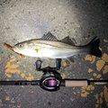 Hunter 627さんの福岡県でのスズキの釣果写真