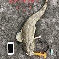 スプーン君さんの沖縄県沖縄市での釣果写真