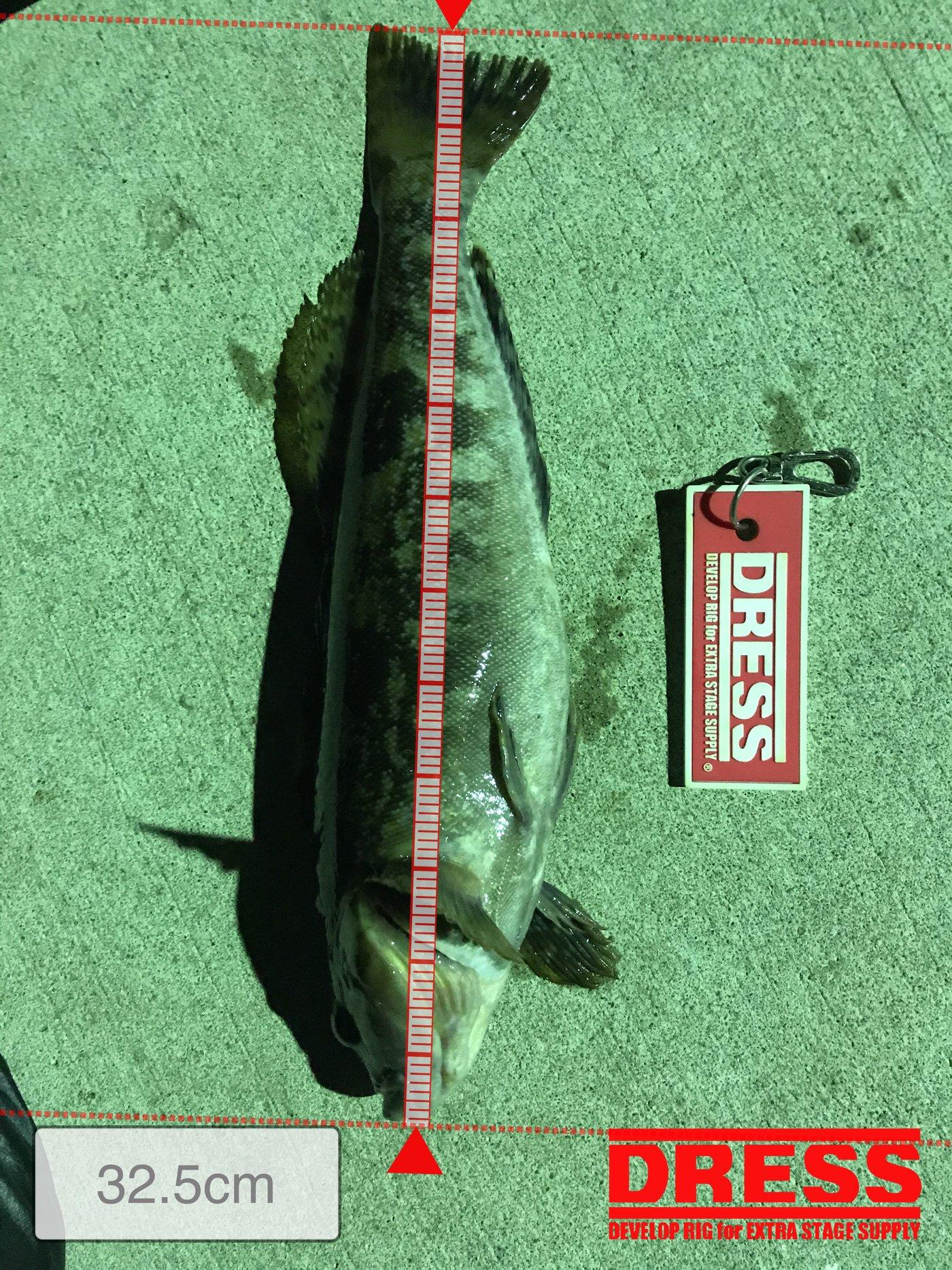 てつこさんの投稿画像,写っている魚はアイナメ