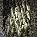かずさんの石川県鳳珠郡での釣果写真