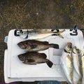 がちゅさんの秋田県での釣果写真