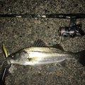 やまだんさんの三重県鈴鹿市での釣果写真