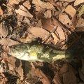 いづさんの長野県での釣果写真