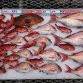 ぽんずさんの鹿児島県出水郡での釣果写真