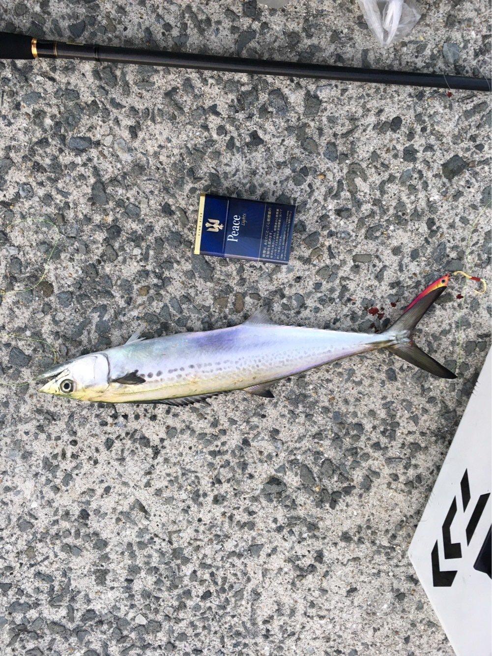 進次郎さんの投稿画像,写っている魚はサワラ