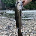 りょうすけさんの宮崎県東諸県郡での釣果写真
