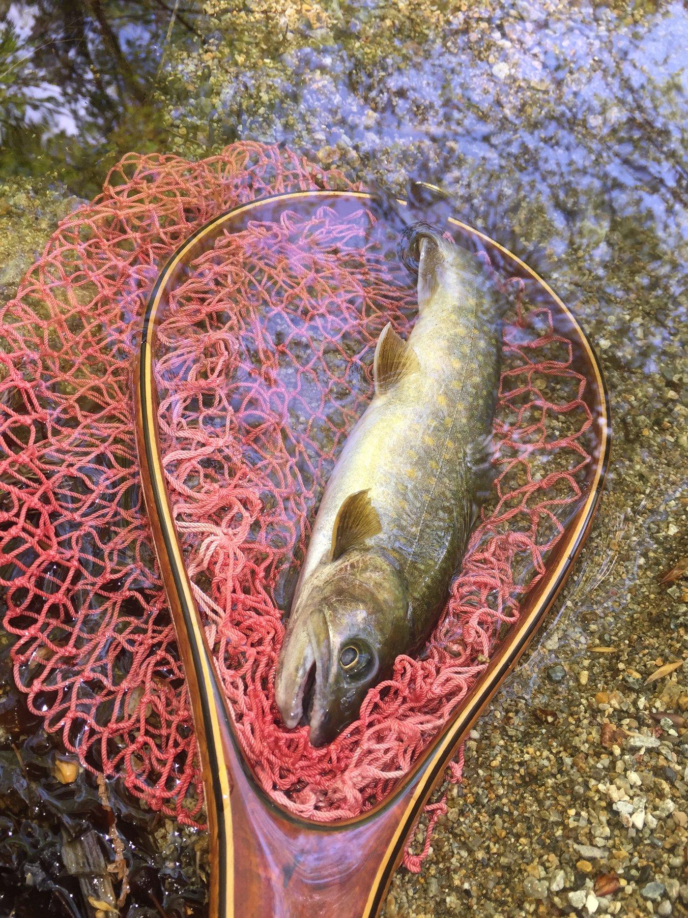 tukaさんの投稿画像,写っている魚はイワナ