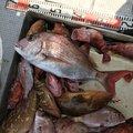 ぱつさんの熊本県天草郡での釣果写真