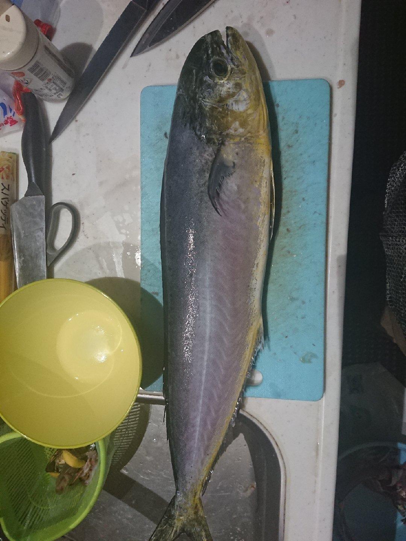 溝渕政文さんの投稿画像,写っている魚はシイラ