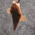 いわさんの鹿児島県いちき串木野市での釣果写真