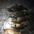 光一さんの北海道室蘭市での釣果写真