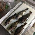 周作さんの北海道苫小牧市での釣果写真