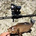 るーさんの三重県尾鷲市での釣果写真