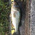 幽希さんの滋賀県での釣果写真