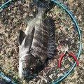 いけさんの鹿児島県南九州市での釣果写真