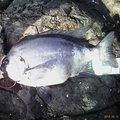 国さんさんの長崎県西海市での釣果写真