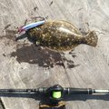 タコ八郎さんの石川県金沢市での釣果写真