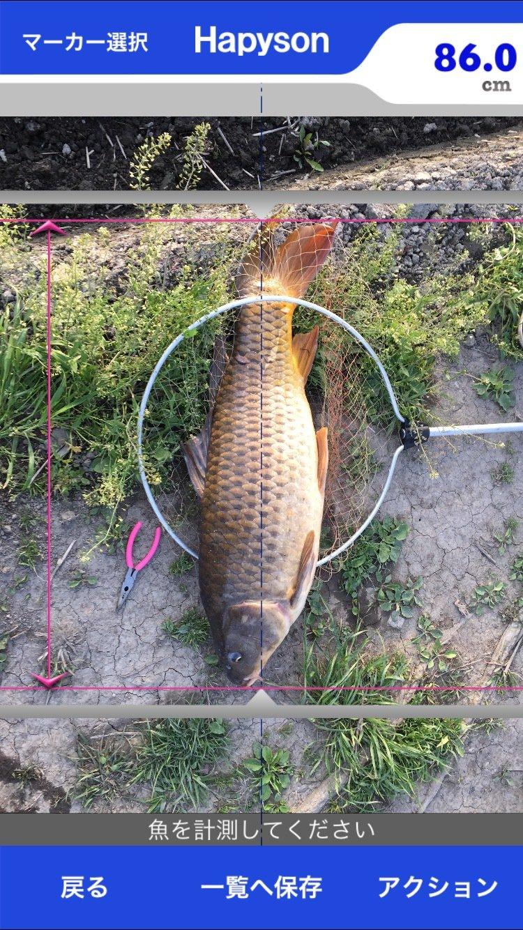 ヤマグチさんの投稿画像,写っている魚は