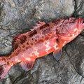 赤星ラオウさんの鹿児島県奄美市での釣果写真