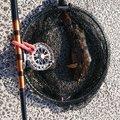 ヤマテツさんの宮城県でのアイナメの釣果写真