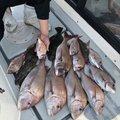 アイアンプレートさんの山口県周南市での釣果写真