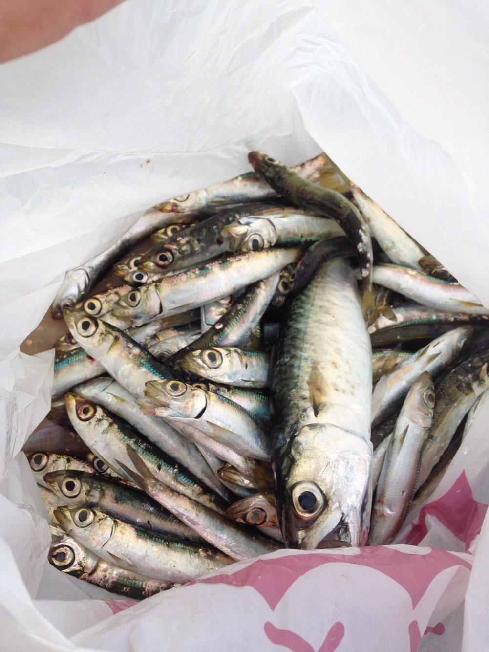 パンクンさんの投稿画像,写っている魚は