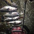 光一さんの北海道苫小牧市での釣果写真