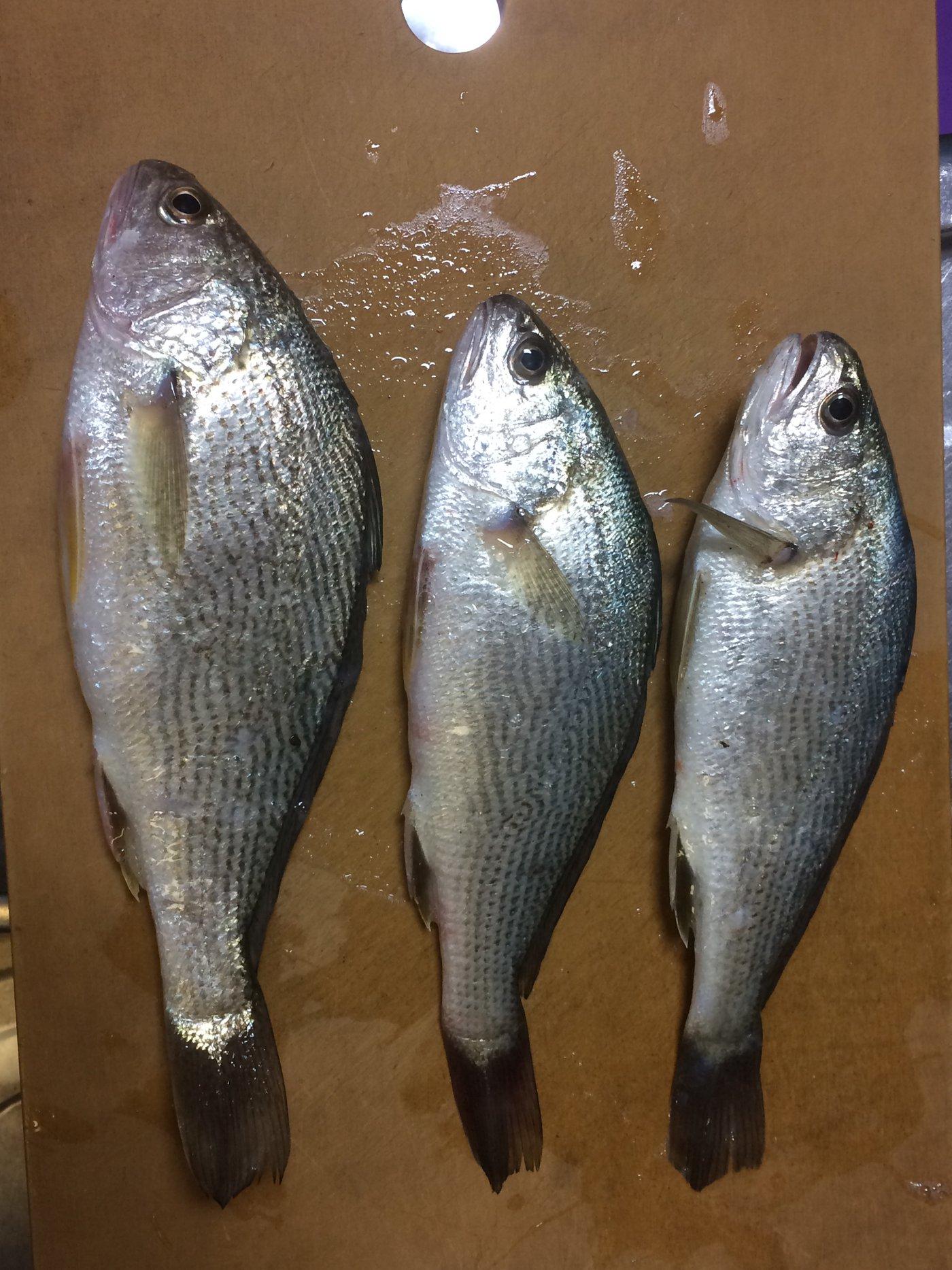 あびさんの投稿画像,写っている魚は,