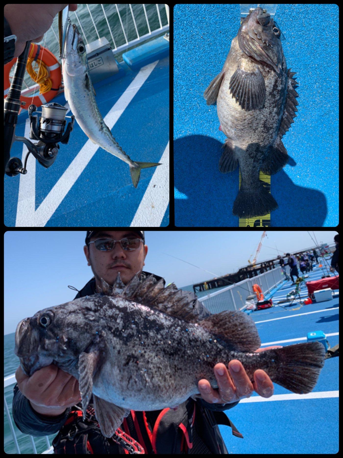 タツヨシさんの投稿画像,写っている魚はクロソイ,マサバ,