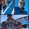 タツヨシさんのマサバの釣果写真