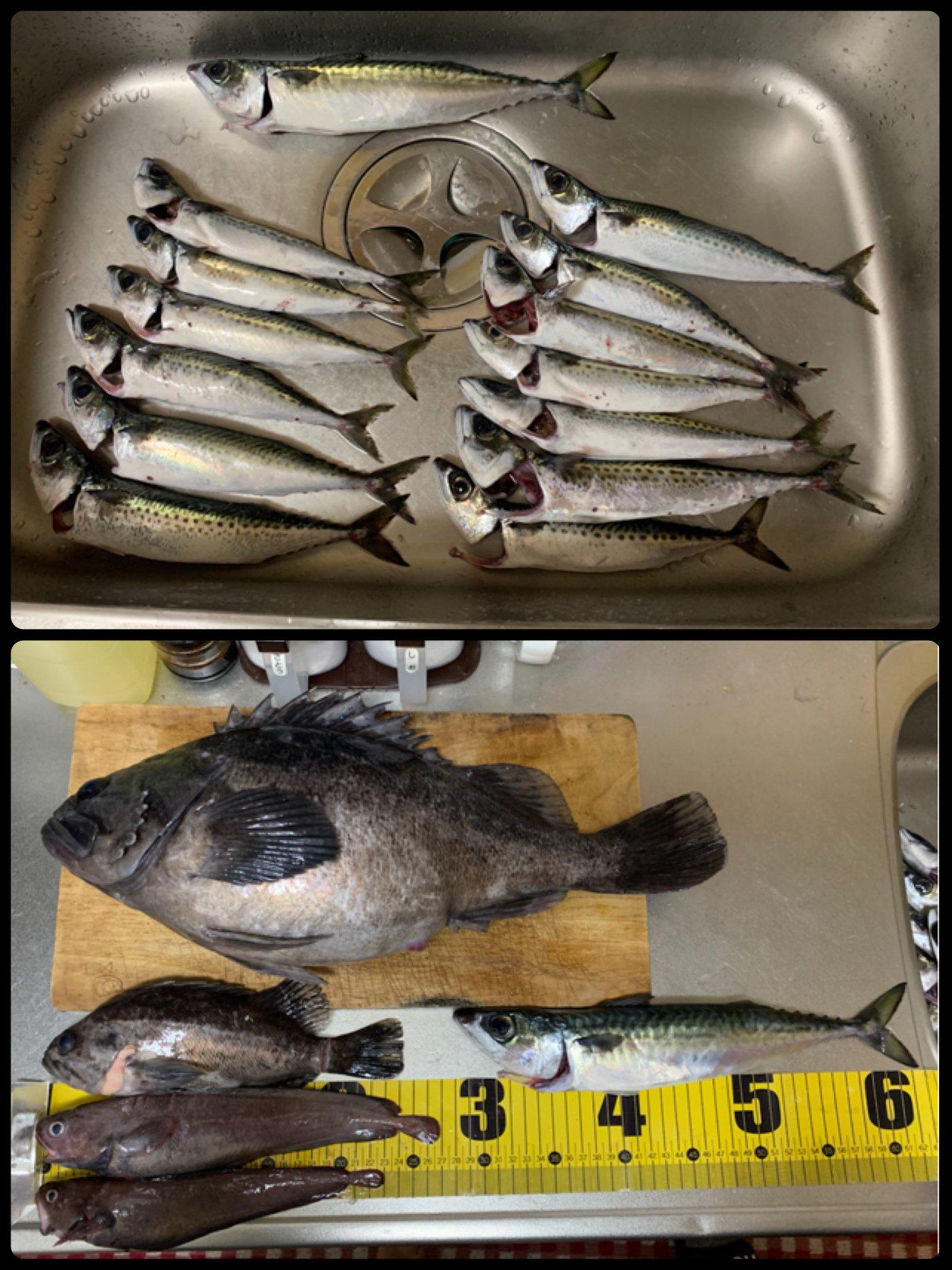 タツヨシさんの投稿画像,写っている魚は