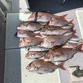 ゆでたまGOさんの兵庫県洲本市での釣果写真