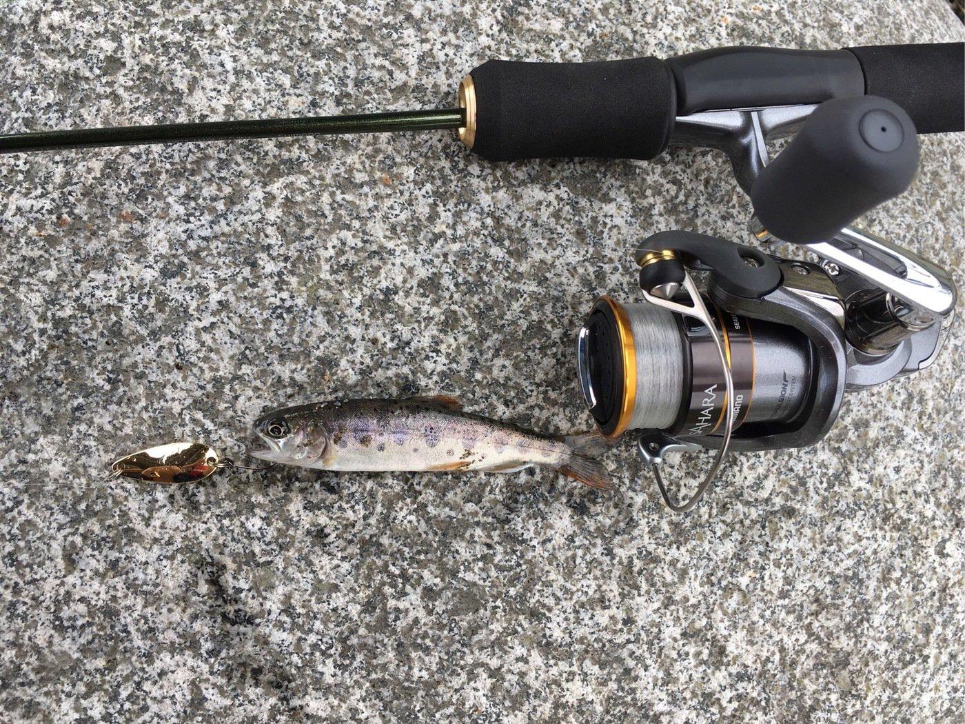 気まぐれ釣り人さんの投稿画像,写っている魚はヤマメ
