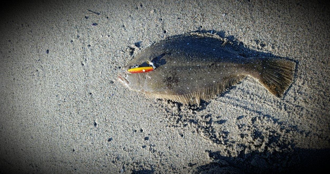 Rock-Fishさんの投稿画像,写っている魚は