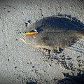 Rock-Fishさんの宮城県岩沼市での釣果写真