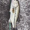 ゆーさんの福岡県久留米市での釣果写真