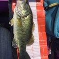 にゃんてぃ〜さんの滋賀県での釣果写真